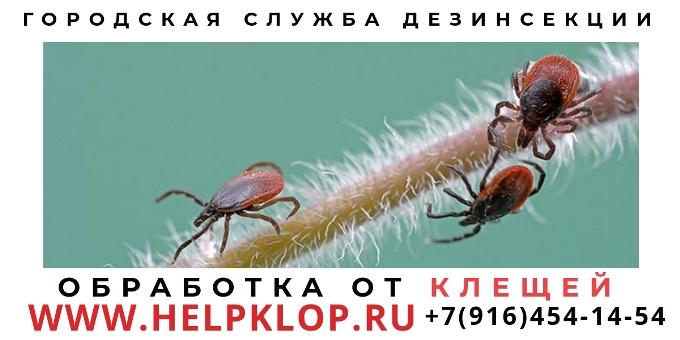 klesh-17